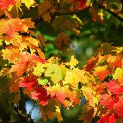 tuinplattegrond en herfstkleuren